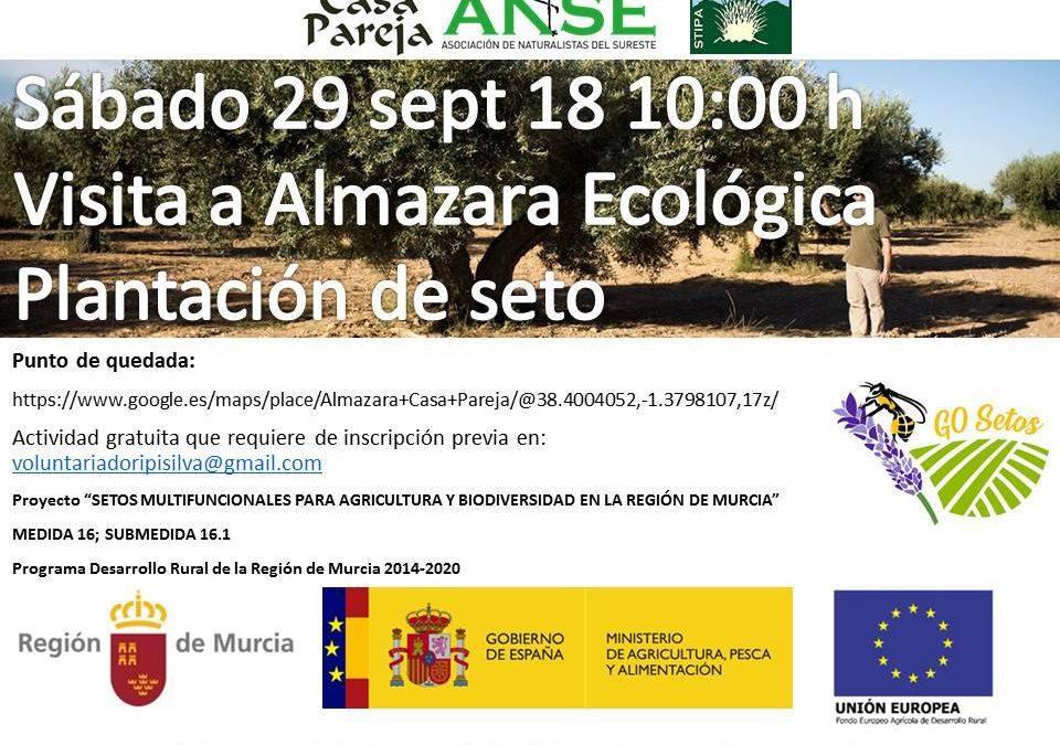 Visita a Almazara Ecológica